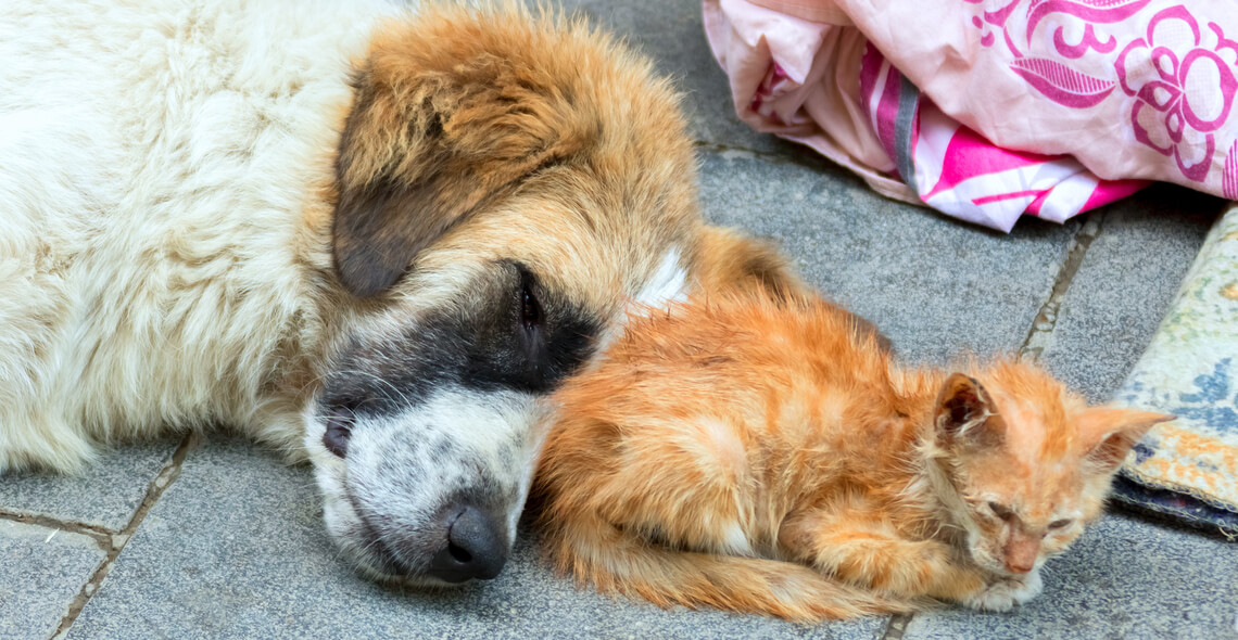 Stray and Feral Welfare Management Certification
