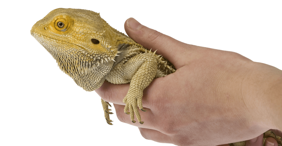 Introduction to Reptile Care Certification